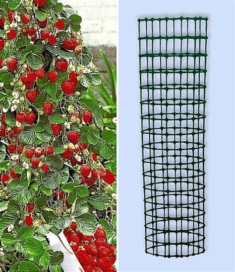 Garten Pflanzen Himbeeren by Kletter Erdbeere Hummi 174 Und Dekorativer Rankturm 1 Set
