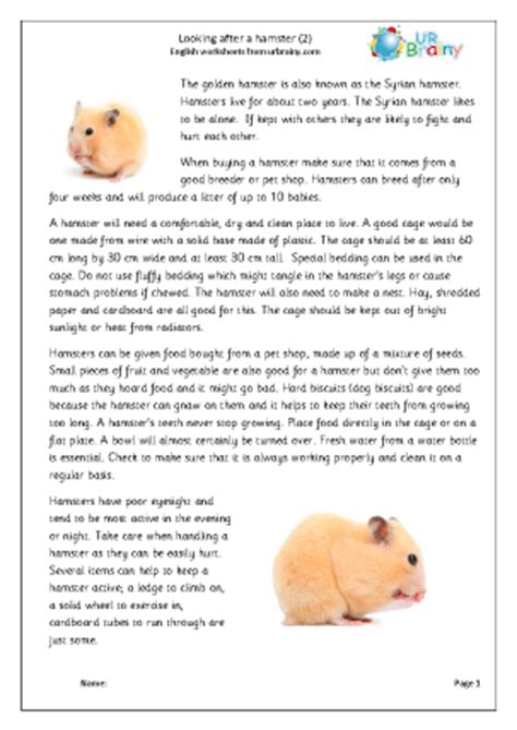 Hamsters are small rodents that are commonly kept as house pets. Hamsters 2 English Worksheet For Key Stage 1