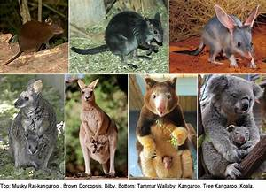 46. How did marsupials migrate from Noah's Ark to ...