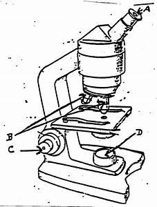 Microscope Drawing Template At Getdrawings