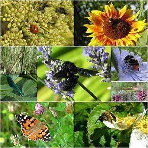 Tiere Im Garten Begraben : tiere im garten n tzliche und sch dliche tiere ~ Lizthompson.info Haus und Dekorationen