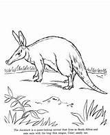 Aardvark Coloring Animal Pages Drawings Drawing Animals Colouring Wild Printable Wildlife Designlooter Identification Preschool Honkingdonkey sketch template