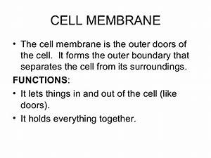 Organelles in an Animal Cell