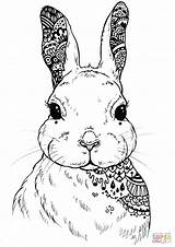 Coloring Seniors Sheets Easy Zentangle Hare Care Worker Aged Healthcare Drukuj sketch template