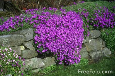 rockery plants pictures free use image 12 04 11 by