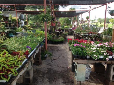 olive garden san angelo san angelo s nursery olive s nursery olive s nursery