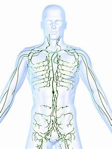All About Lymph Nodes  U2013 In Good Health  U2013 Central New York