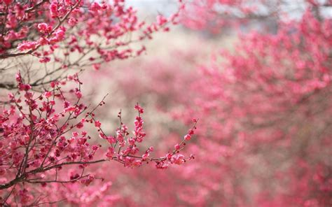 pink nature wallpapers wallpaper cave
