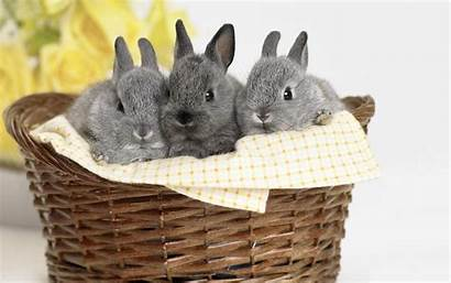 Cute Bunny Wallpapers Bunnies Wallpapertag Related Mobile