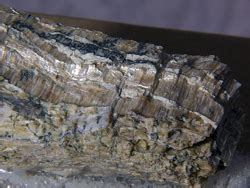 link  working  asbestos  mesothelioma
