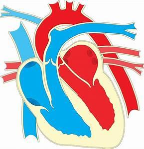 Wiring Diagram Heart Drawing Clip Art