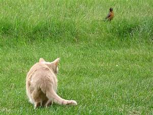 the prowling Bee: She sights a Bird—she chuckles—