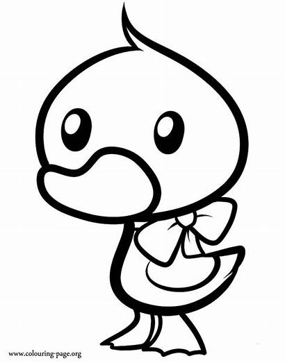 Duckling Coloring Ribbon Duck Wearing Colouring Printable