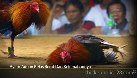 Namun perlu di ingat,ayam juga harus memiliki pukulan yang terarah. Bentuk Dan Model Kaki Ayam Petarung Pukul Saraf/Ko ...