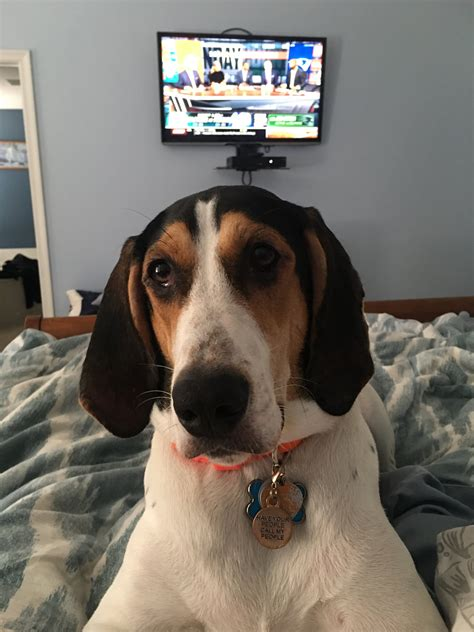 walker treeing coonhound names dog male odie dogs female