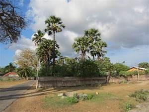 ° Guide: Uyarapulam in Sri Lanka (Northern Province ...