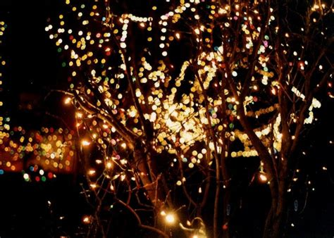 11 twinkle lights photography
