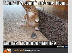 Katz und Maus… Lustige Bilder auf Spassnet
