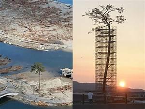 Japan erects massive sculpture of the last standing tree for Japan erects massive sculpture of the last standing tree from a forest destroyed by 2011 tsunami