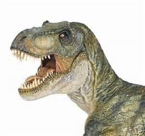 Dinosaur Head Tyrannosaurus Rex