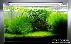 Süßwasserfische Fürs Aquarium : 2748 besten aquaria bilder auf pinterest aquarien fisch ~ Lizthompson.info Haus und Dekorationen