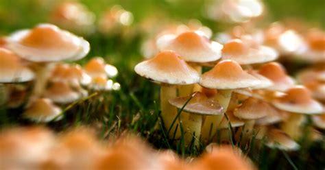 A City In Michigan Just Decriminalized Magic Mushrooms