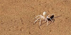 Weiße Spinne Deutschland : weisse spinne im w stensand foto bild tiere wildlife spinnen bilder auf fotocommunity ~ Orissabook.com Haus und Dekorationen