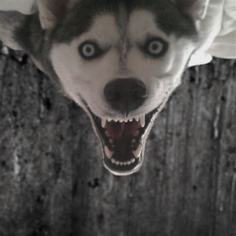 creepy dog photoshopbattles