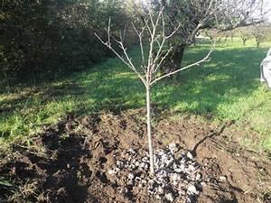 Planter Un Cerisier : que faire au jardin en ce mois de d cembre 2015 ~ Melissatoandfro.com Idées de Décoration