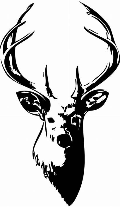 Deer Skull Clip Drawing Clipart Clipartion