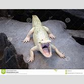 alligator-mouth-clipart