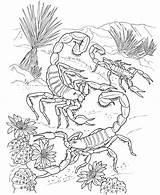 Desert Ecosystem Drawing Coloring Plants Pages Getdrawings Cool sketch template