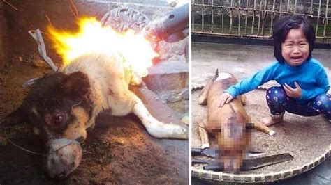 petition stop dog  cats  eaten  china changeorg
