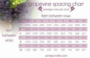 Wine Facts And Figures