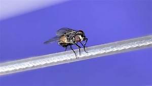 Comment Chasser Les Mouches : lutter contre les mouches dans la maison c t maison ~ Melissatoandfro.com Idées de Décoration