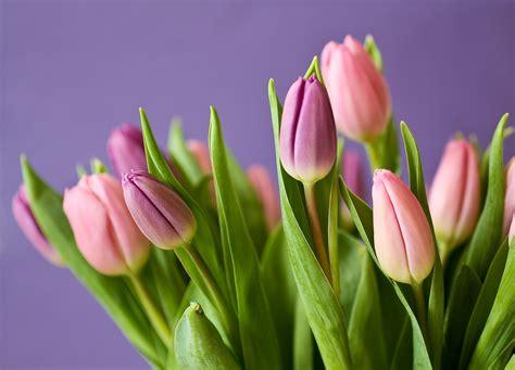 Šodien svinam Mātes dienu! | VENTSPILNIEKS.LV