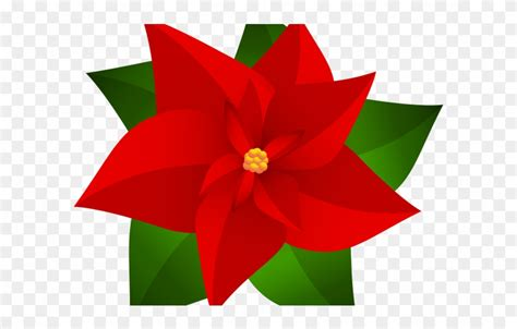 christmas flower drawing    clipartmag