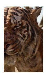 Image - Jungle Book 2016 90.png | Disney Wiki | FANDOM ...
