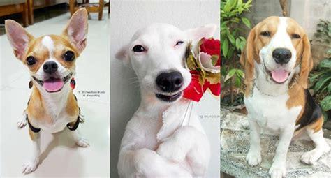 รวมภาพน้องหมา 6 สายพันธุ์ขนสั้น ที่คนไทยนิยมเลี้ยง ...