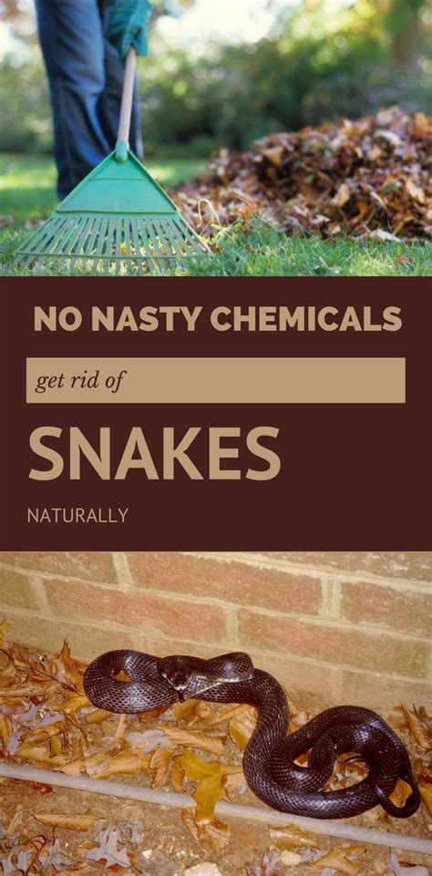 how to get rid of garden snakes no chemicals get rid of snakes naturally
