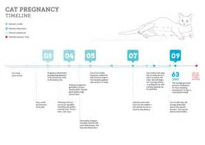 pregnancy growth chart car interior design