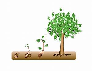 Tree Seeds Clipart 20 Free Cliparts