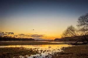Free, Images, Landscape, Tree, Nature, Horizon, Marsh, Cloud, Sky, Sunrise, Sunset, Mist