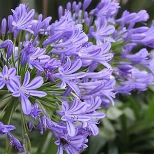 Blau Blühender Bodendecker : blau bl hende pflanzen und blumen bestimmen ~ Frokenaadalensverden.com Haus und Dekorationen