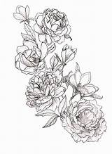 Magnolia sketch template