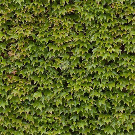 green hedge texture seamless