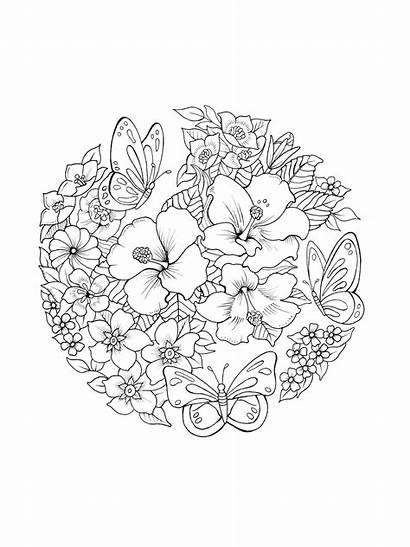 Coloring Pages Mandala Butterfly Adult Printable Flower