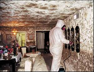 mold-removal - Alabama Real Estate Institute
