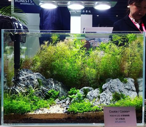 Aquascape Lighting by Cookie Rgb Led Lighting System Faao Aquascaping
