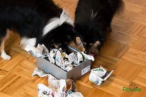 Hunde Intelligenzspielzeug Selber Machen : intelligenzspiele mit alltagsgegenst nden zeitung pawtie ~ A.2002-acura-tl-radio.info Haus und Dekorationen